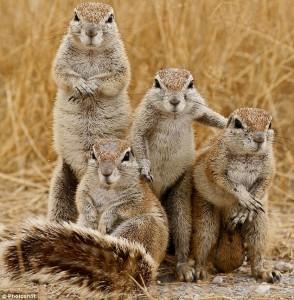 Vāveru ģimene - Kartiņas ar dzīvniekiem 28
