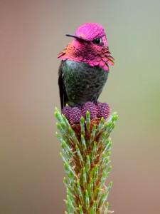 Kolibri - Kartiņas ar dzīvniekiem 30