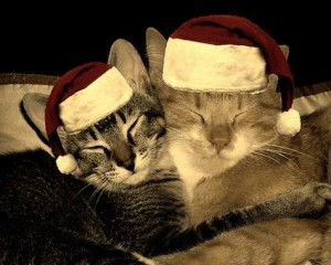 Ziemassvētku kaķi - Kartiņas ar dzīvniekiem 19