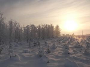 Ziemas ainava - Ziemas kartiņa 28