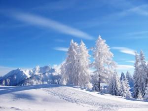Ziemas ainava - Ziemas kartiņa 12