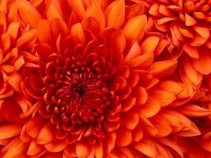 Kartiņas ar ziediem 77