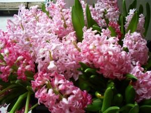 Kartiņas ar ziediem 58