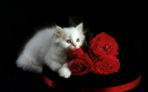 Kaķēns un rozes - Kartiņas ar dzīvniekiem 29