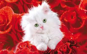 Kaķēns rozēs - Kartiņas ar dzīvniekiem 15
