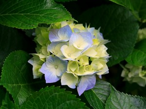 Kartiņas ar ziediem 80