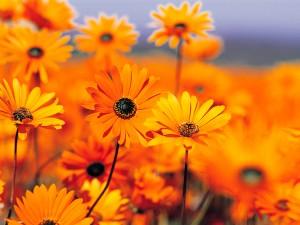 Kartiņas ar ziediem 56
