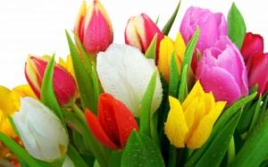 Kartiņas ar ziediem 30