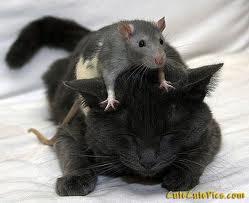 Žurka un kaķis - Kartiņas ar dzīvniekiem 32