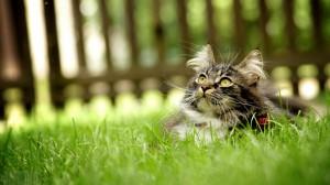 Kaķis zālē - Kartiņas ar dzīvniekiem 41
