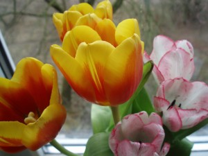 Kartiņas ar ziediem 106