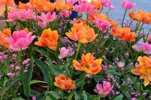 Kartiņas ar ziediem 70