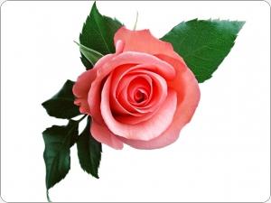 Roze - Kartiņas ar ziediem 40