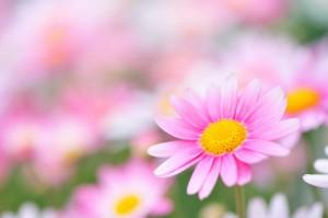 Kartiņas ar ziediem 73