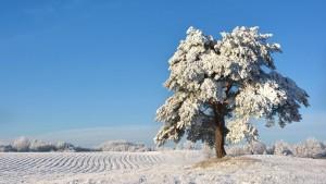 Ziemas kartiņa 31