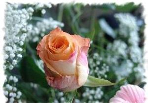 Kartiņas ar ziediem 85