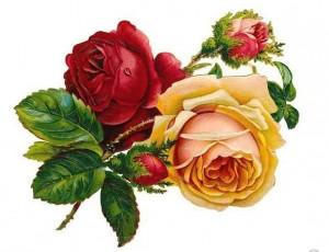 Kartiņas ar ziediem 63