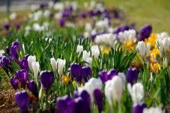 Pavasara kartiņa 9