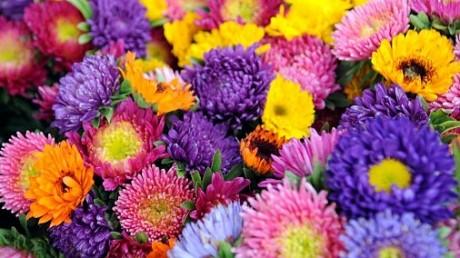 Kartiņas ar ziediem 71