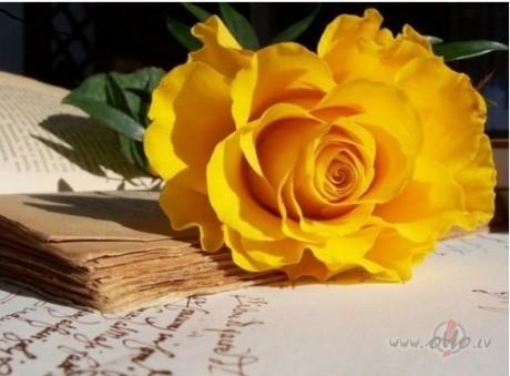Kartiņas ar ziediem 94