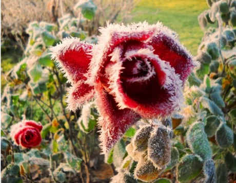 Kartiņas ar ziediem 104