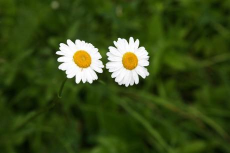 Kartiņas ar ziediem 102