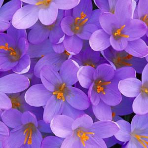 Kartiņas ar ziediem 96