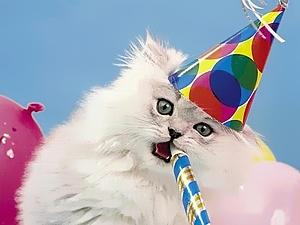 Kaķis dzimšanas dienā - Dzimšanas dienas kartiņa 8