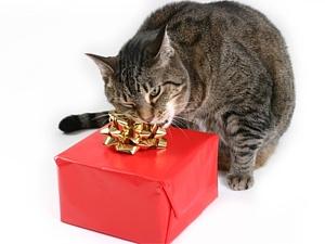 Kaķis un dāvana - Dzimšanas dienas kartiņa 10