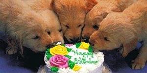 Kucēni pie kūkas - Dzimšanas dienas kartiņa 7