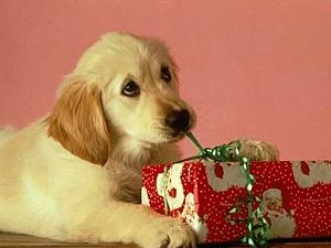 Kucēns ar dāvanu - Kartiņas ar dzīvniekiem 1