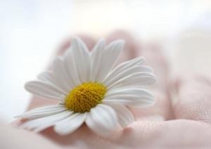 Margrietiņa - Kartiņas ar ziediem 9