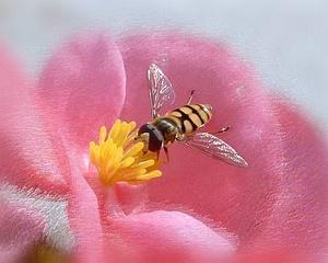 Bite uz zieda - Kartiņas ar dzīvniekiem 11