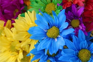 Kartiņas ar ziediem 7