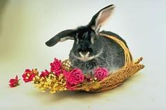 Trusis un grozs ar ziediem - Kartiņas ar dzīvniekiem 6