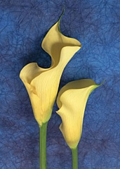 Kartiņas ar ziediem 46