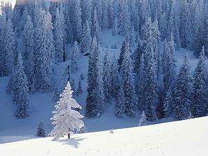 Mežs ziemā - Ziemas kartiņa 5